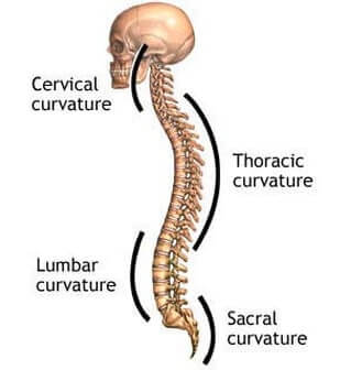 natural curves of the spine