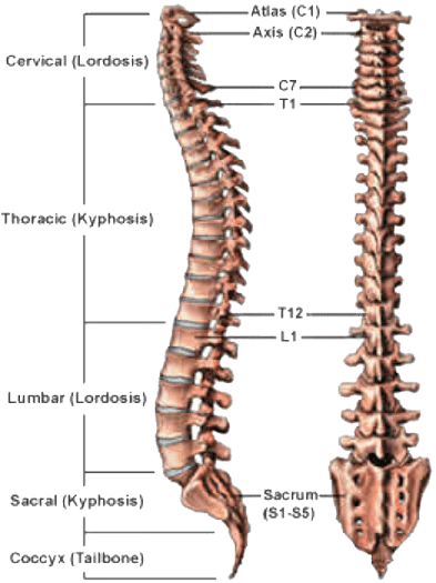 Back And Spine Complete Pain Care Helping You Return To You